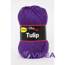TULIP 4059 - fialová